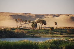 Bank of the River Nile, Egypt